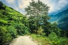 Green Landscape with tree in Nepal Stock Photo
