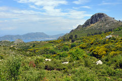 Green landscape on samos island, greece Stock Photo