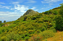 Green landscape on samos island, greece Royalty Free Stock Images