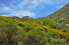 Green landscape on samos island, greece Royalty Free Stock Photos