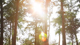 Green landscape with sun rays shining through branches of trees, park landscape stock video
