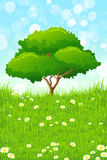 Green Landscape with Tree Royalty Free Stock Images