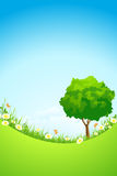 Green Landscape with Tree Royalty Free Stock Photography