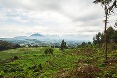 Landscape view in Virunga reserve, Rwanda. Green Landscape view in Virunga reserve, Rwanda Royalty Free Stock Photos
