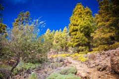 Green landscape in the Vilaflor Royalty Free Stock Photos