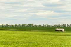 Green landscape with white tank trailer truck. Driving along a country road amidst farming fields stock photos