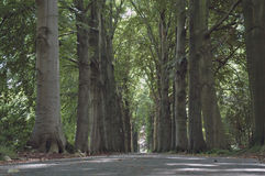 The green lane. Green lane in a park Royalty Free Stock Photography