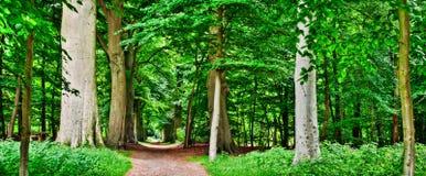 Green Lane. Panoramic photo of green lane royalty free stock photos