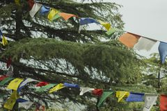 Green larch tree and buddhist flags with mantras. The green larch tree and buddhist flags with mantras royalty free stock photos