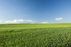 Free Green Large Hillside Field And Blue Sky Stock Photo - 138857430