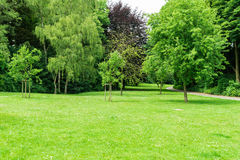 Green Large lawn with trees Royalty Free Stock Images