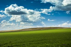 Green large meadow and clouds on a blue sky royalty free stock image