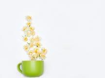 Green large mug full of daffodils on white background Royalty Free Stock Image