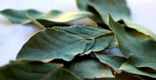 Green laurel leaf . Stock Photography