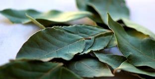 Green laurel leaf . Stock Photography