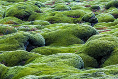 Green lava fields Royalty Free Stock Images