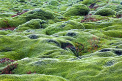 Green lava fields Stock Photography