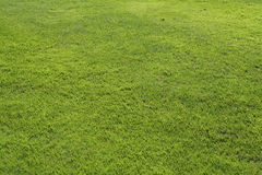 Green lawn Royalty Free Stock Photo