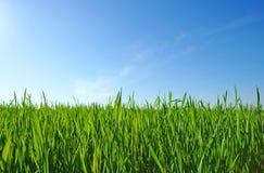 green lawn arkivfoton