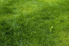 Green lawn stock photos