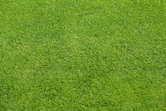 Green lawn. Cultivated land for sport and relaxation Stock Image