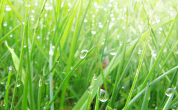 Green lawn Royalty Free Stock Photos