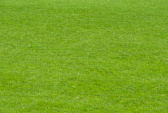 Free Green Lawn Royalty Free Stock Images - 16090999