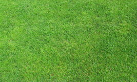 Green Lawn. Background in Spring Stock Photo