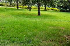 Green lawn. With trees in china Royalty Free Stock Image