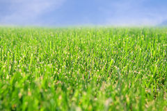 Green lawn. And blue sky Stock Photography