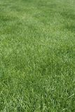 Green lawn Stock Photos