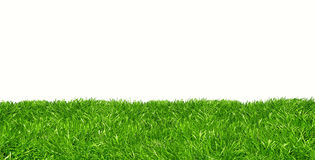 Green lawn against white background Royalty Free Stock Photography