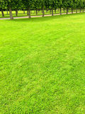 Green lawn and alley with linden trees Royalty Free Stock Image