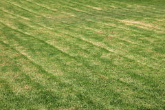Green lawn as background. Royalty Free Stock Images