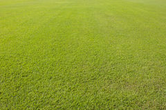 Green lawn background Royalty Free Stock Images