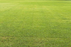 Green lawn background. Royalty Free Stock Photography