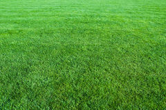 Green lawn background Royalty Free Stock Photography