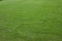 Green lawn for background Royalty Free Stock Photo