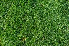 Beautiful green grass texture background stock photography