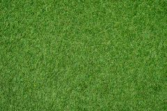 Green lawn for background.Green grass background. texture. top view. royalty free stock images