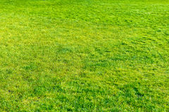 Green lawn for background Royalty Free Stock Photos