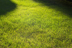 green lawn,backyard for background Stock Images