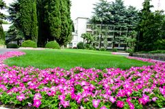 Green lawn with beautiful flowers in the park royalty free stock images