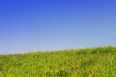 Green lawn with blue sky. In spring Stock Photos