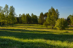 Green lawn with blue sky. City lawn with green grass and blue sky Royalty Free Stock Photography