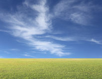 Green lawn on a blue sky day. Stock Photography