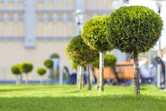 Green lawn with bright grass in a city park with decorative trees on a sunny summer day. Beautiful rest area in urban surrounding. Green lawn with bright grass stock photography