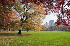 Green lawn in Central Park. In New York City, Fall Stock Images