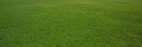 Green lawn in the city park. Banner for design stock photos