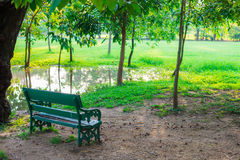 Green lawn in city park with bench Stock Image